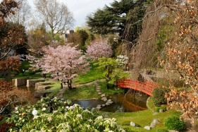 Musée_Albert_Kahn_-_Jardin_japonais_-_Cerisiers_et_Magnolias_en_fleurs